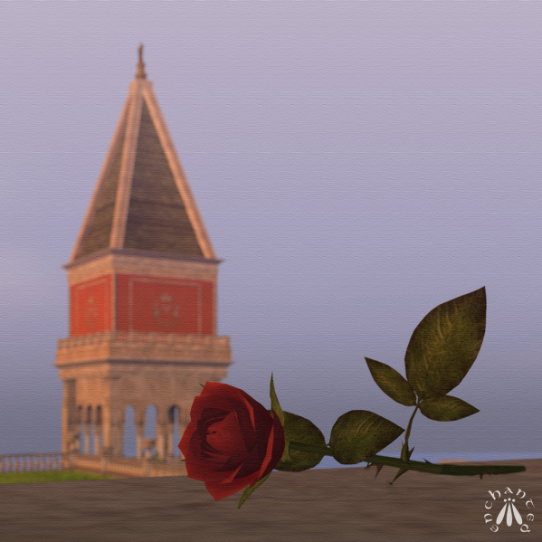 The Rose BLOG - 7