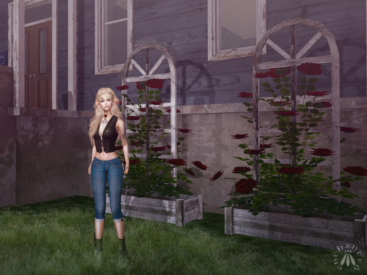 Gardening - BLOG - 7