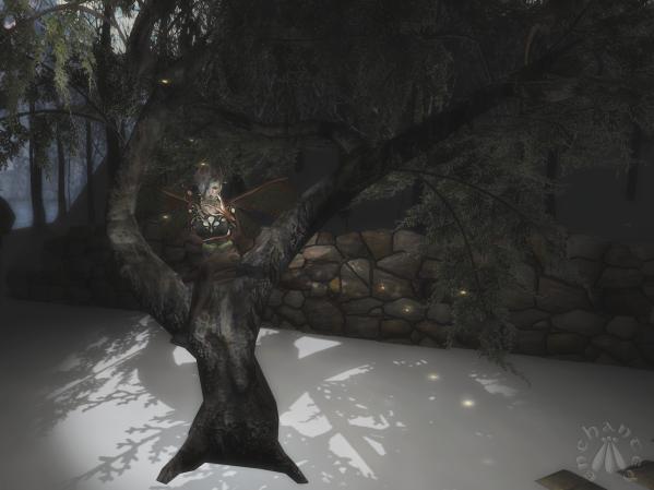 Juniper Tree BLOG - 1